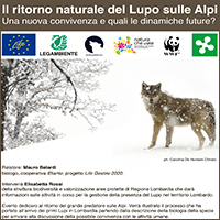 Il ritorno naturale del Lupo sulle Alpi